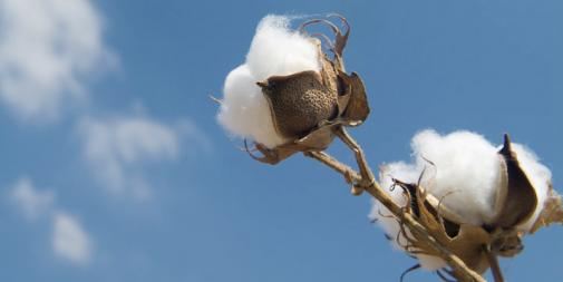 Organic cotton for better sleep