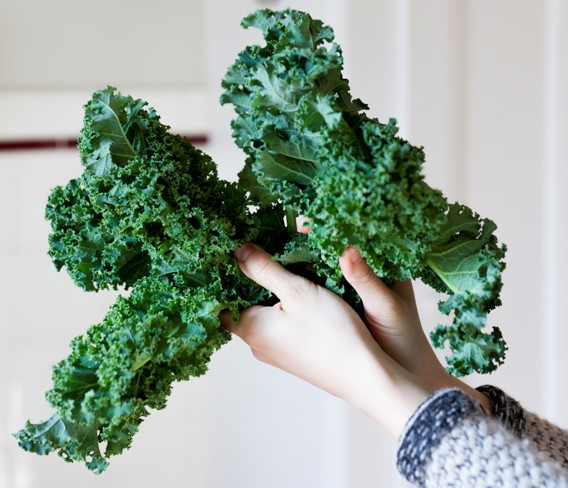 Image of hands holding kale